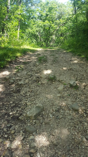 The Scuppernong Trail can be rocky in sections.