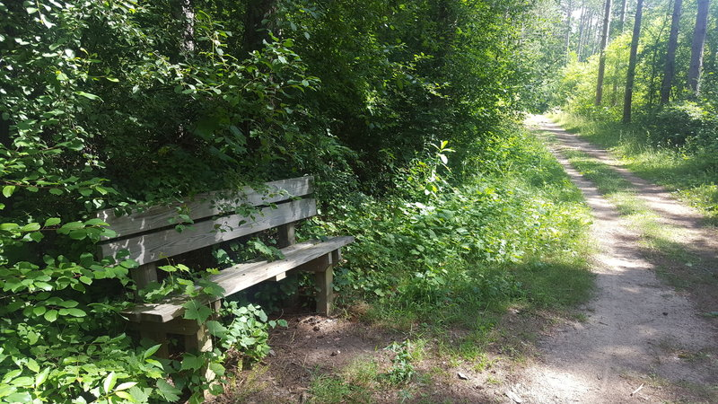 The Scuppernong Trail has pleasant (albeit slightly overgrown) benches periodically along its length.