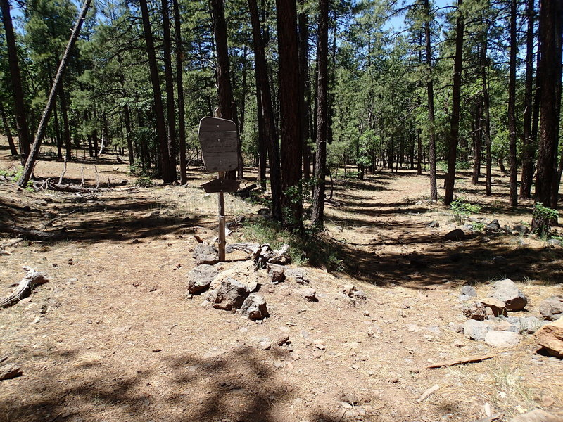 This is the trailhead for Dorsey Spring Trail (right) and Hog Hill Trail (left).