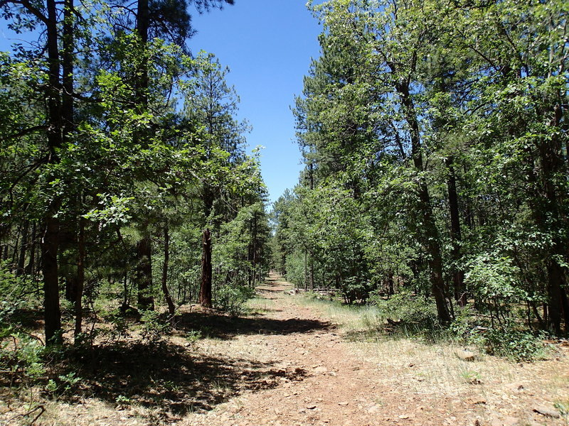 Dorsey Spring traverses established forest on a pleasant tread.