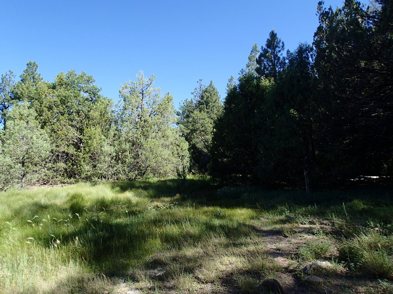 The Kelsey Spring Trail pops into this open meadow for a brief second.
