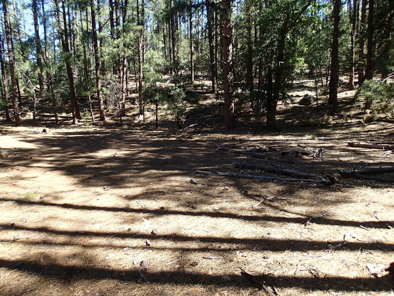 This is another great campsite along the Kelsey Spring Trail.