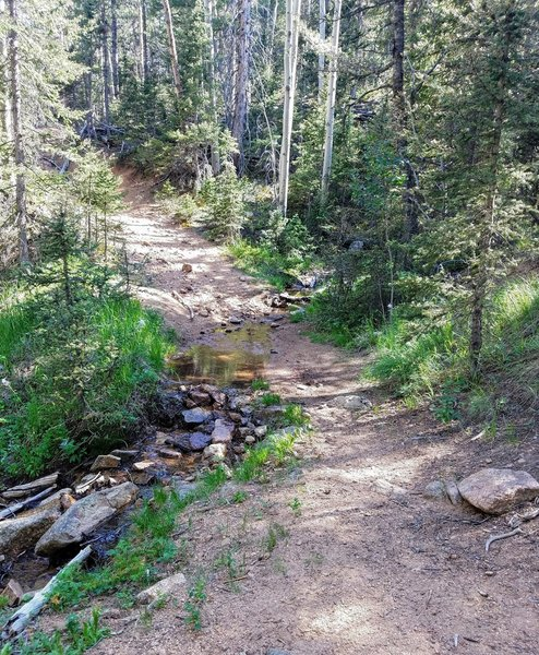 Flowing spring just before last steep slope heading to FSR 381. Great place for lunch!