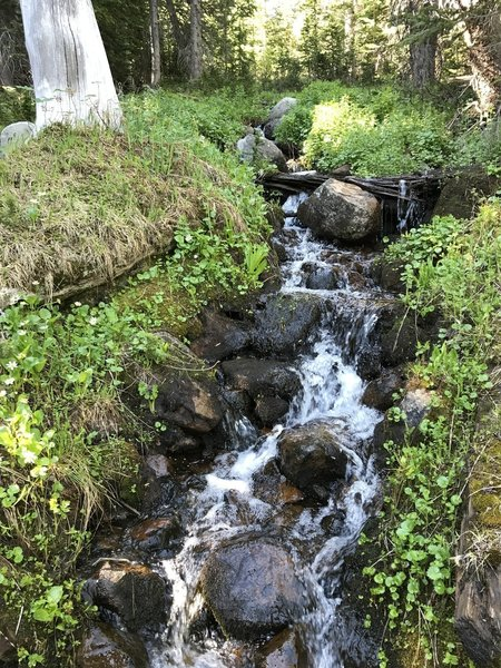 One of the beautiful small streams in the area (early July).