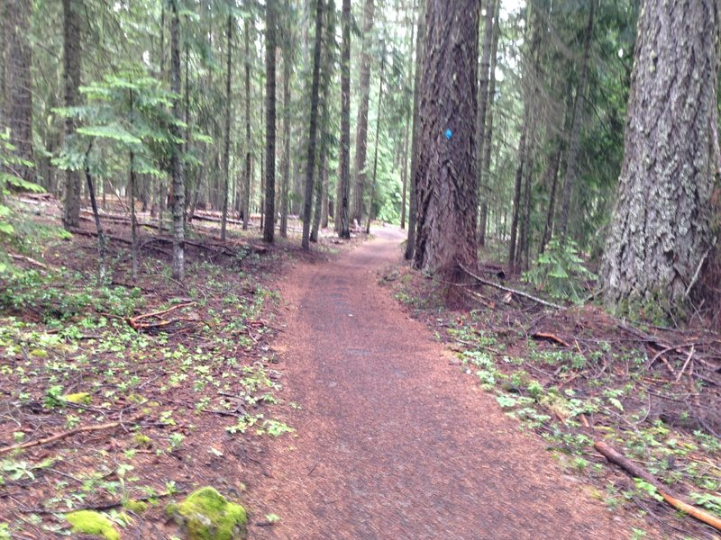 High Lakes Trail one mile from Fish Lake Resort.