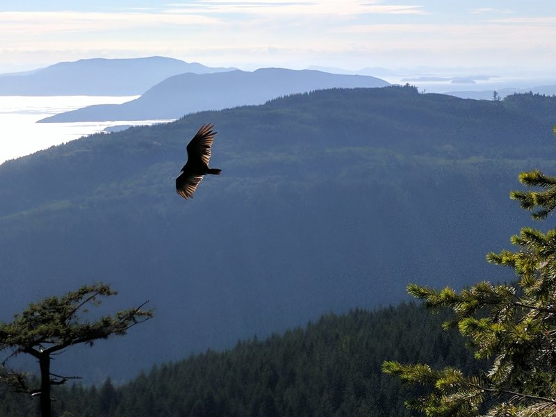Bird soaring over North Butte viewpoint.