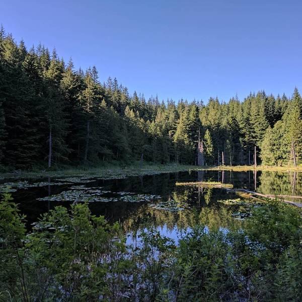 Lily Lake.