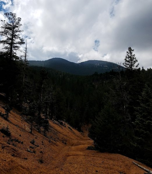 View of Almagre Mountain from Foresters Trail (#701).