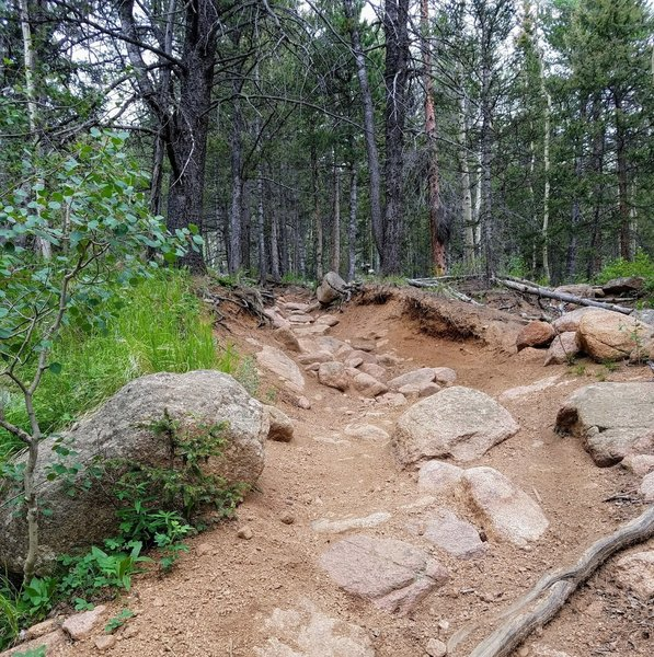 This part of the trail gets rocky and a bit steeper.