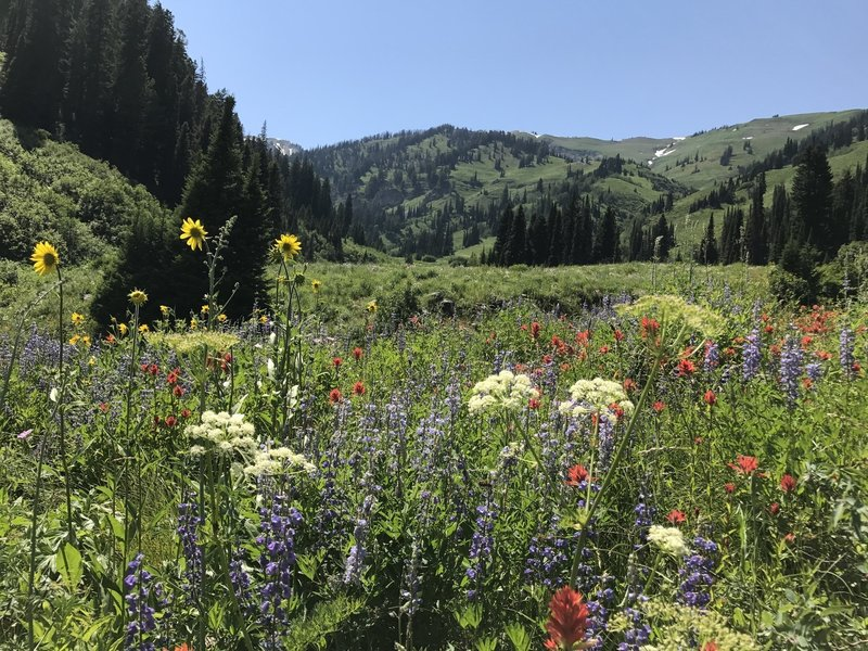 Wildflowers galore in the early summer, especially in the lower sections of the canyon.