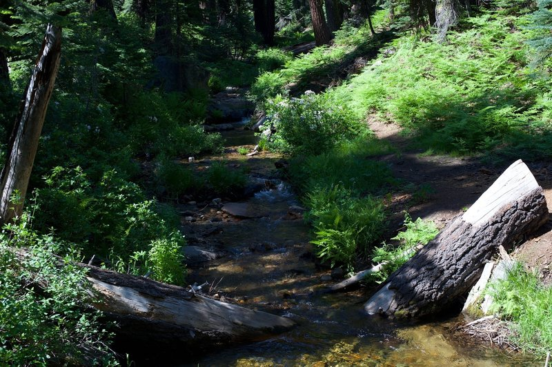 Indian Creek crosses the North Rim Trail during early summer after a large snowpack.