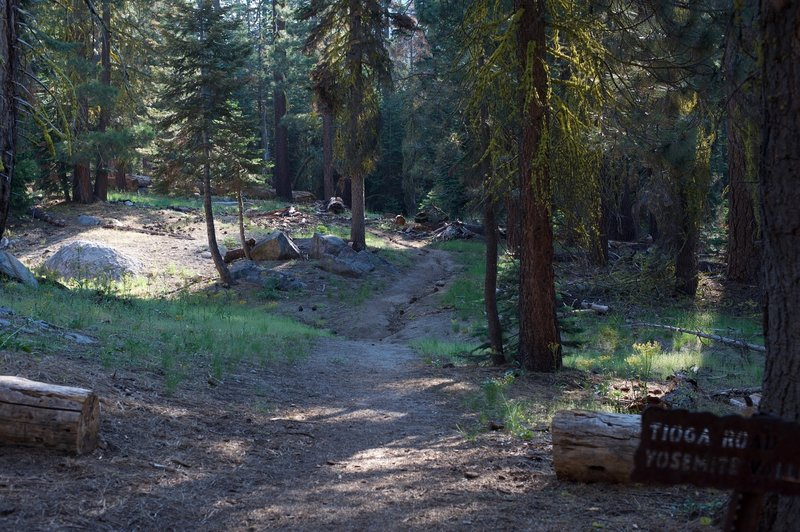 The Lehamite Creek Trail departs the Upper Yosemite Falls to North Dome Trail and begins climbing toward Tioga Road.