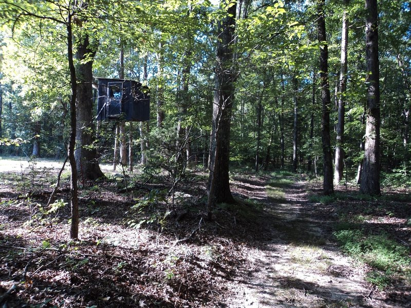 A deer blind within a hundred yards of Wallyworld? A fort for the kids? A lookout for nazi spies? Who knows? This cool little aerie actually overlooks a small plot of well-tended cornina!