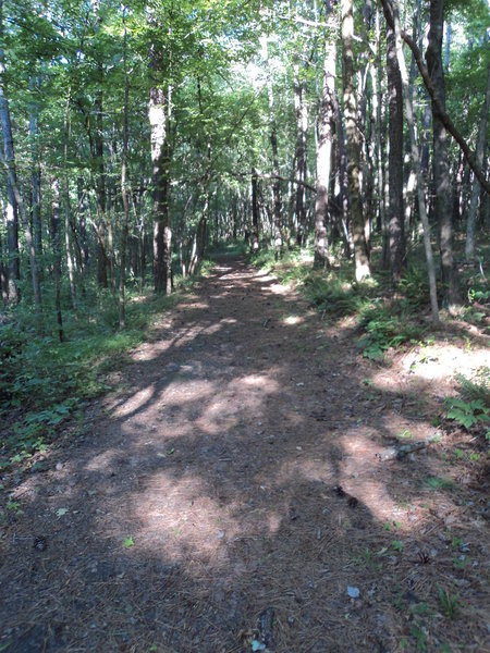 Not, it's not the most scenic trail in Tennessee, but there's just something sublime about a path through the woods, covered with pine needles, plenty of shade on a hot day...