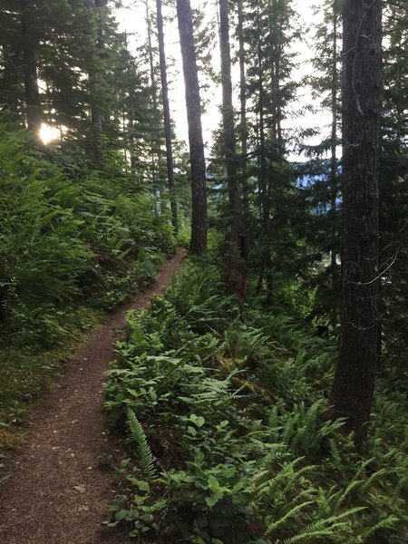 Between the root-drops and rock outcroppings, the singletrack is smooth and easy going.