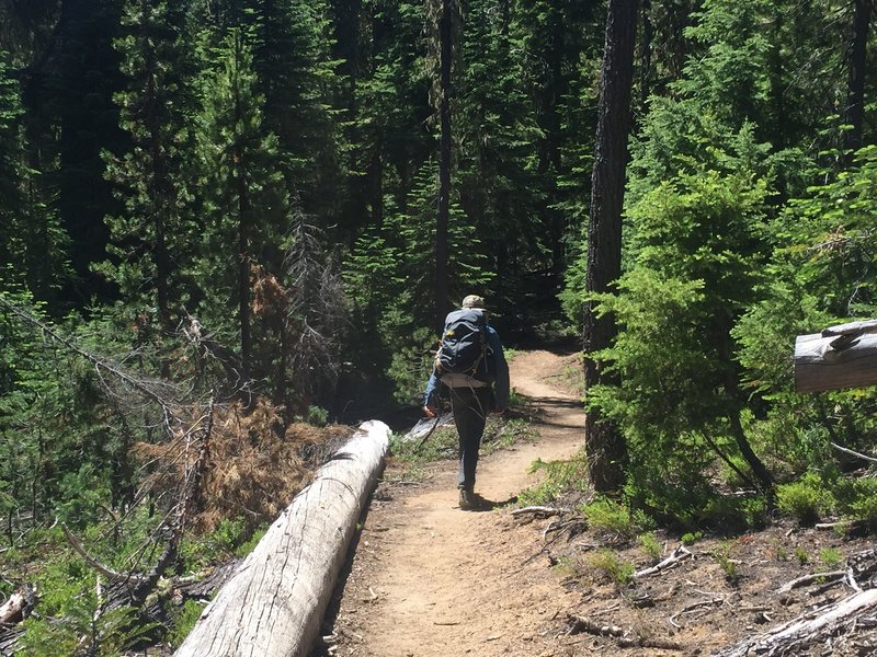 Hiking south on the PCT.