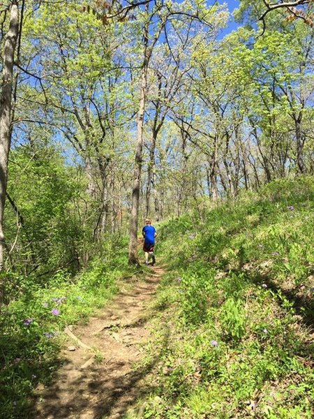 Hiking Trails near Noster State Park on ozark park trail map, missouri military installations map, st. joe state park trail map, missouri state house map, detailed missouri state map, middle tennessee parks map, trail of tears state park map, missouri transportation map, mississippi parks map, missouri towns map, jefferson city missouri state map, missouri byways map, louisville parks map, missouri schools map, missouri national forests map, maryland parks map, missouri waterfalls map, missouri islands map, missouri historic sites map, missouri rest areas map,