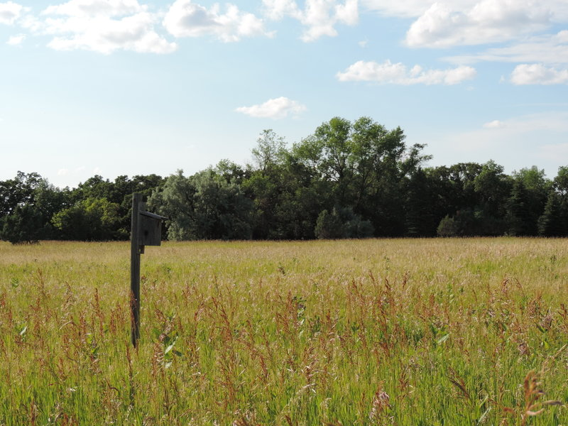 There are many bird feeders along the Eco Loop to view birds.