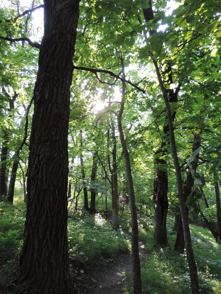 Lovely view of the wooded trail along the Cattail Trail.