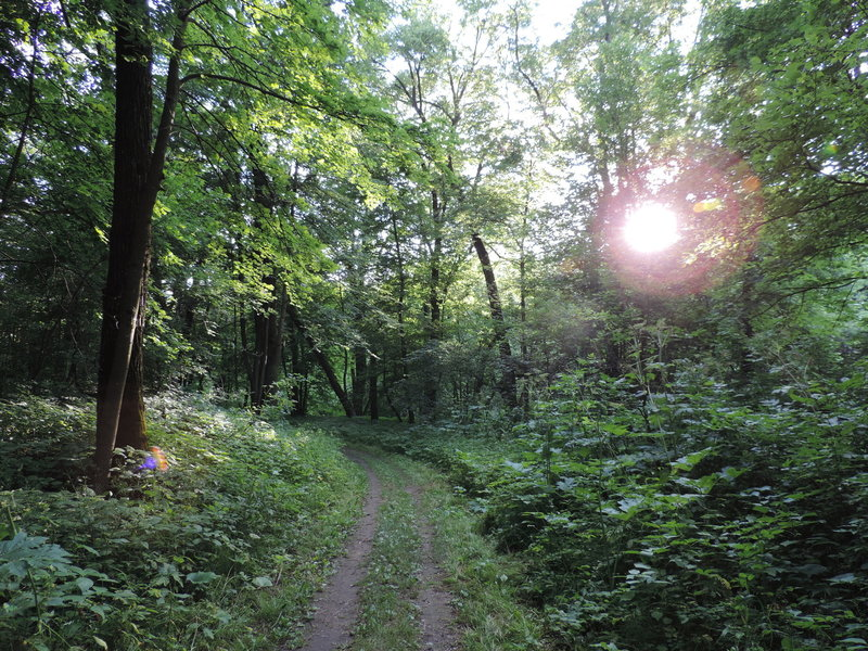Sun poking through the trees on the Fisher Loop.