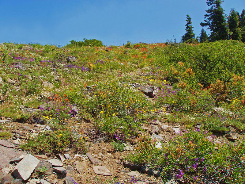 Flowers of many colors on Marble Mountain Rim.