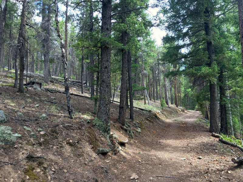 The first couple miles follow an old forest service road.