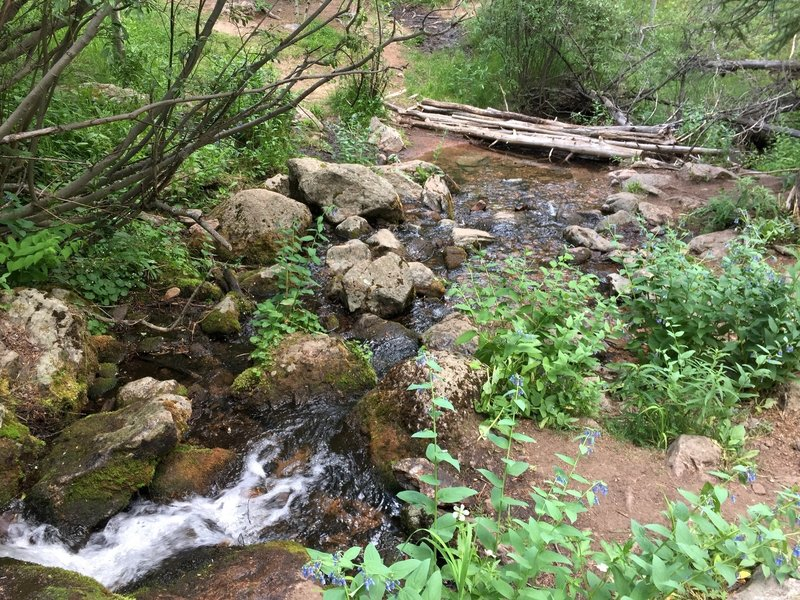 The crossing at this healthy stream ~4.5 miles in is a great place to refill on water.