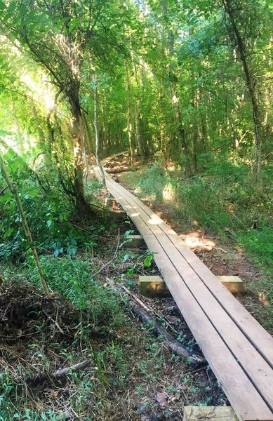 Raised trail through the low country