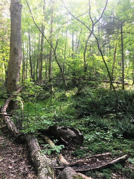 Vine-filled forest