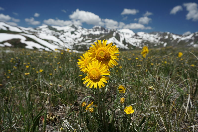 A variety of wildflowers blanket the grassy hills of the Continental Divide.