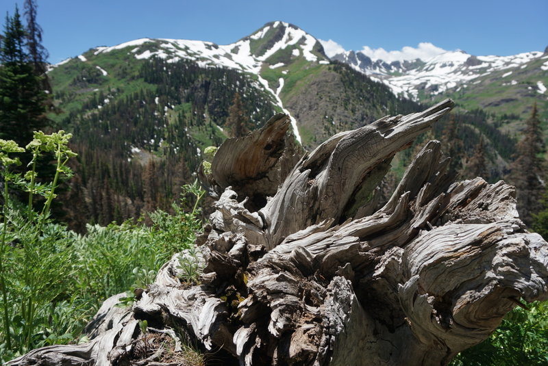 Interesting photo ops adorn the trails throughout the Weminuche Wilderness.