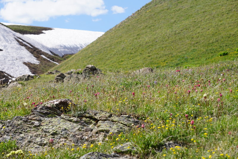 Wildflowers add wonderful color to the sea of green grass.