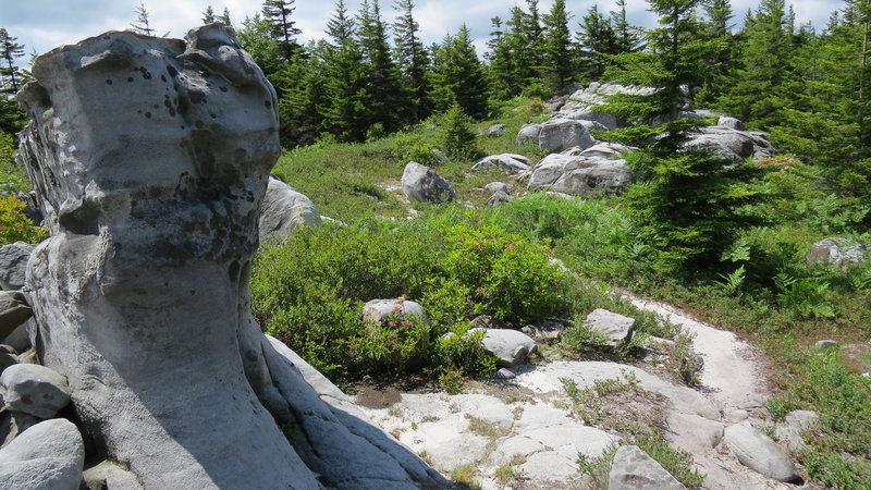 The wind carves out these sandstone rock formations, and the trail bed is more akin to beach sand than anything else on Rocky Ridge Trail in the Dolly Sods Wilderness Area.