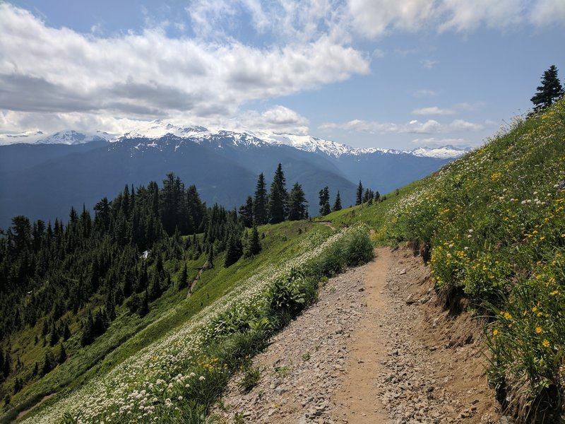 Mt Baker (in the clouds), wildflowers and nice trail through the meadow