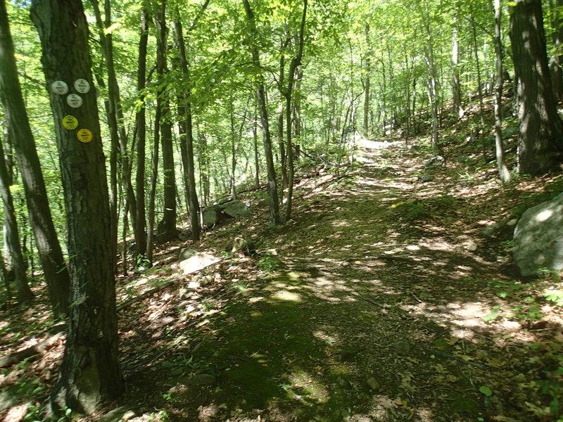 End of Fishkill Ridge Trail
