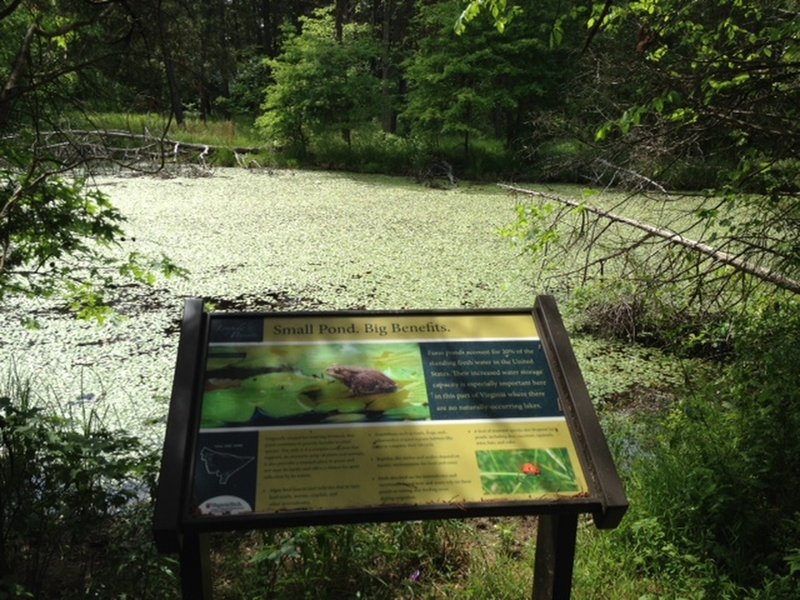 Just one of 34 interpretive signs at Leopold's Preserve. This one was co-authored by Virginia Tech's Conservation Management Institute. It's about the benefits of small ponds, like this one here.