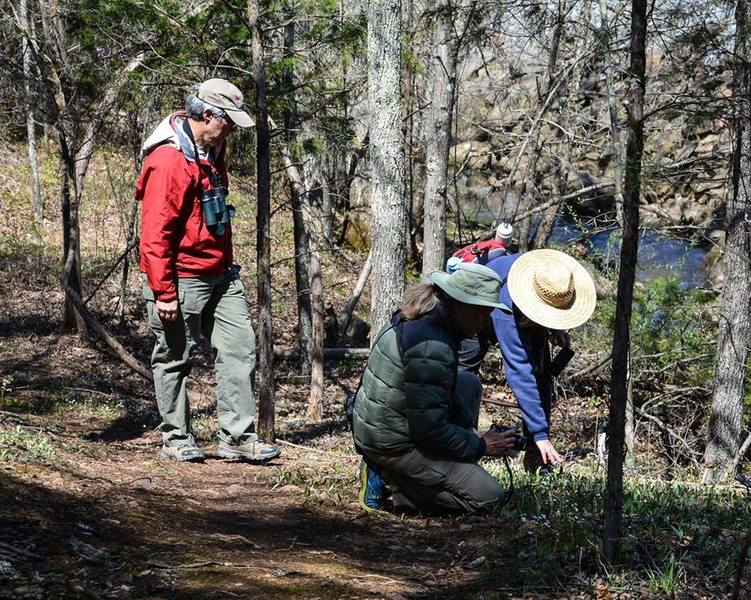 Members of the Virginia Native Plant Society (VNPS) checking out Early Saxifrage and Trout Lilies