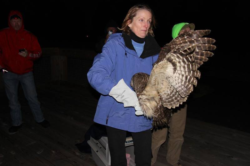 Owl release at Leopold's Preserve