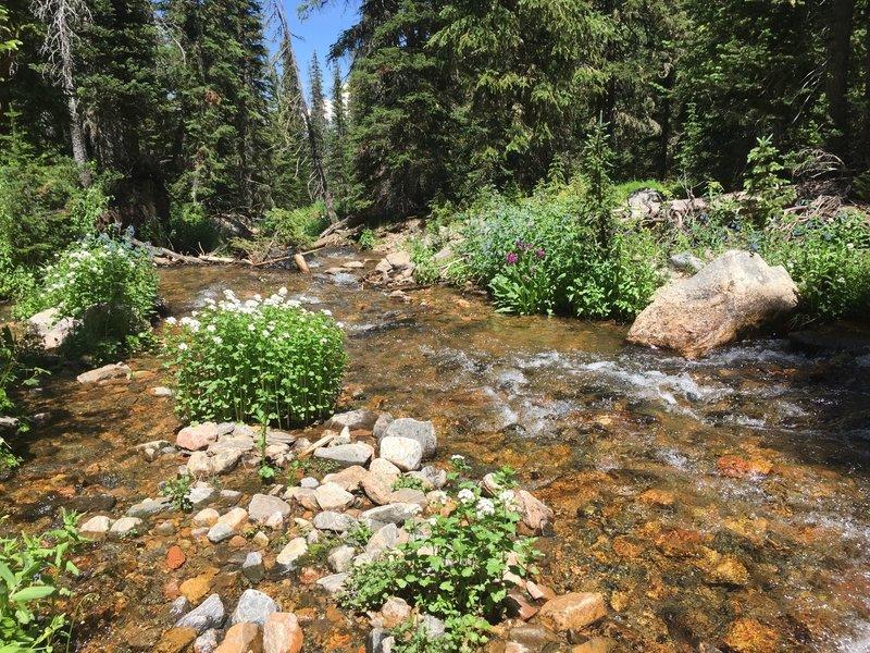 Jim Creek and wildflowers