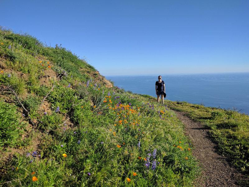 Pt. Mugu views (and flowers)!