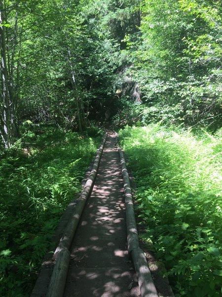 One of multiple Trail bridges