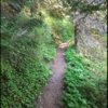 A favorite part of this trail: soft shaded singletrack.