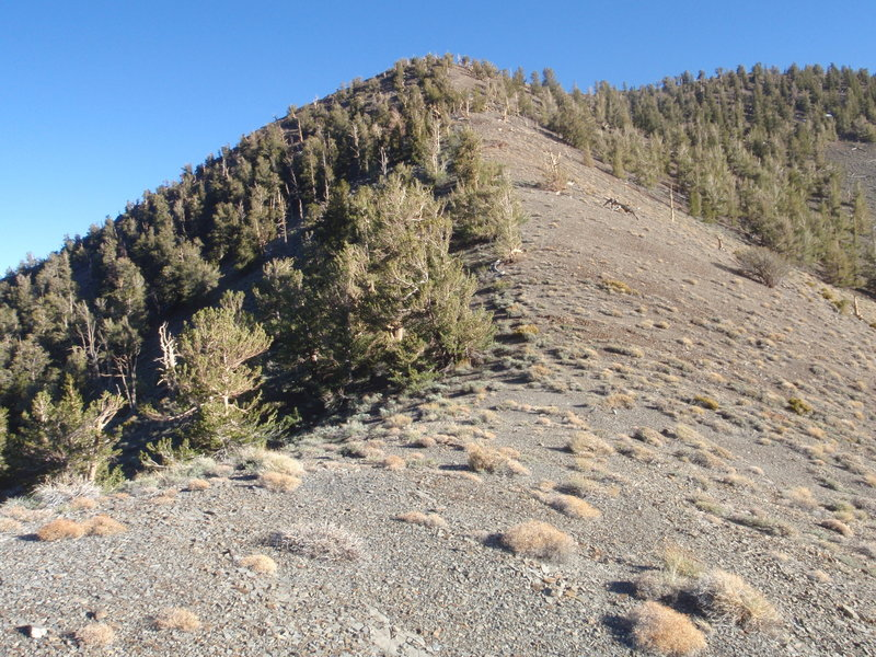 View south from Forgotten Pass. Some small campsites in the trees to the left.