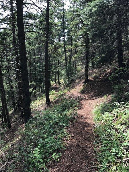 Chautauqua Trail climbing the northern ridge.