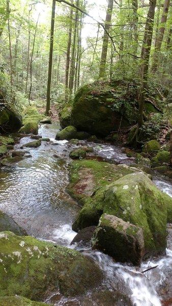 Falls Creek just off the trail.