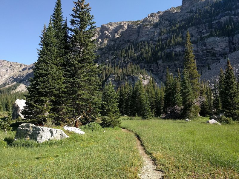 Nice meadows and easy going on the St. Vrain Glacier Trail.