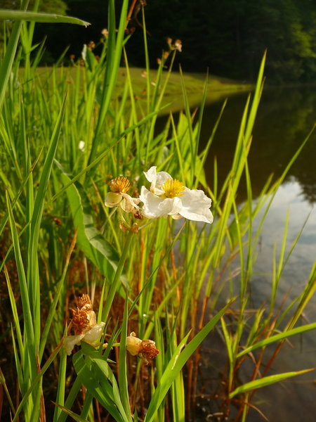 Lots of wildflowers surround the lake during summer.