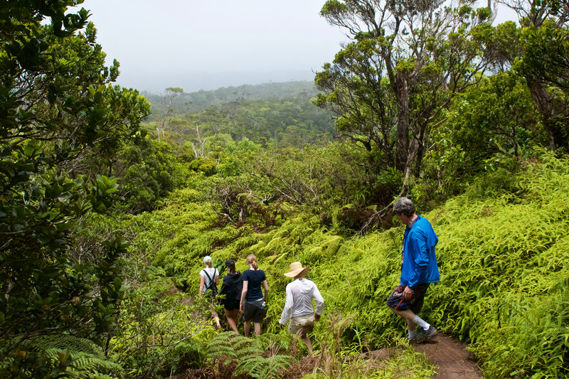 Occasional boardwalks and steps provide a more solid point from which to enjoy the forest.