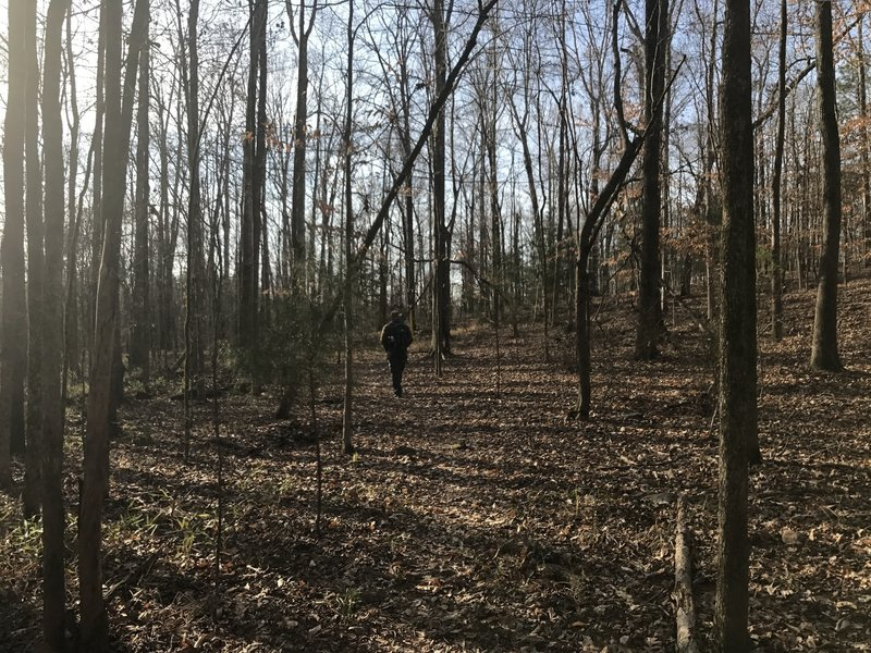 The Eagle Scout Trail in early spring.