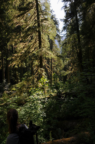 The beautiful old growth is easier to enjoy when getting carried.